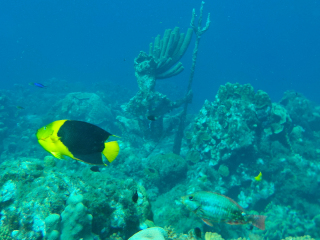 Curacao_Coral_Riff_Fish_16_9