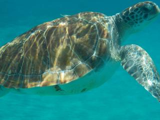 Curacao_Wasserschildkröte_2_16_9