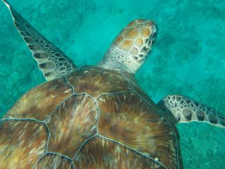 Curacao_Wasserschildkröte_6_16_9