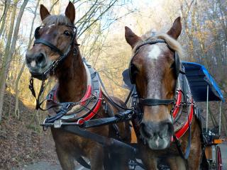 Czech_Republic_Horses_6_9