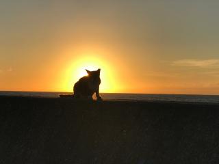 Japan_Miura_Sunset_Cat_16_9