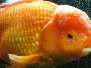 Japan_Okinawa_Fish_16_9