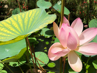 LaPalma_Garden_Flower_16_9