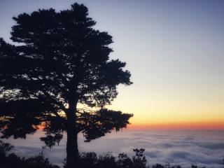 Teneriffa_Parque_Nacional_Tree_2_16_9