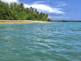 Tobago_Beach_Palms_Bluewater_16_9