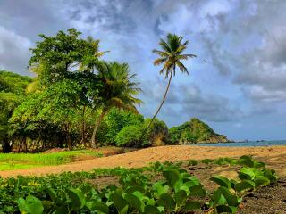 Tobago_Beach_Palmtree_Clouds_16_9
