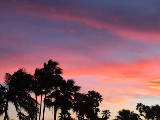 Curacao_Mangobeech_Palmtree_Sunset_16_9