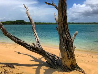 Tobago_Beach_Tree_16_9