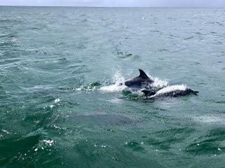 Tobago_Dolphins_Ocean_16_9