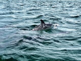 Tobago_Dolphins_Ocean_2_16_9