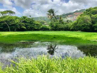 Tobago_Lawn_Lake_Palmtree_16_9