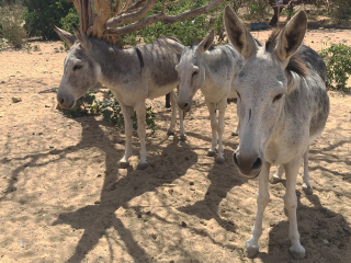 Aruba_Donkey_2_16_9