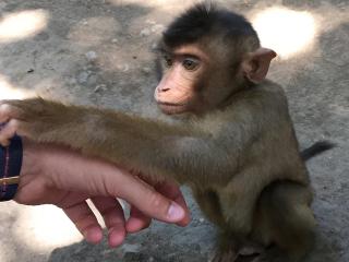 Bali_Monkey_Human_16_9