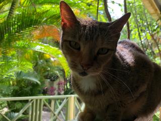Barbados_Botanic_Garden_Cat_16_9