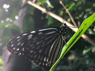 Barbados_Butterfly_16_9