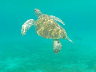 Curacao_Wasserschildkröte_3_16_9