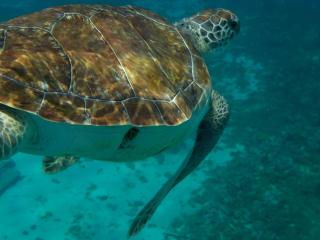Curacao_Wasserschildkröte_8_16_9