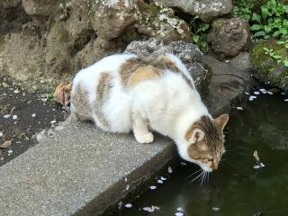 Japan_Enoshima_Cat_16_9