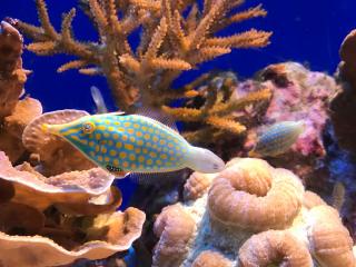 Japan_Okinawa_Coral_Fish_16_9