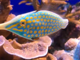 Japan_Okinawa_Coral_Fish_2_16_9