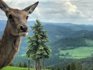 Österreich_Countryside_Deer_16_9